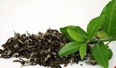 ایران، پس از روسیه، دومین خریدار چای هند است / افزایش 150 درصدی صادرات چای هند به ایران