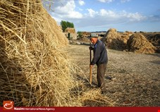 کشاورزان به قیمت 1600 تومانی نرخ خرید تضمینی گندم اعتراض دارند