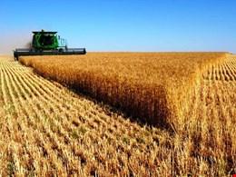 تحقق جهش تولید در بخش کشاورزی ضریب امنیت غذایی کشور را بین ۲ تا ۵ درصد افزایش میدهد