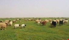 توسعه دامپروری فراسرزمینی ایران در بلاروس به ایستگاه پایانی رسید