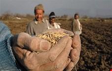 تولید بیش از 50 رقم بذر به بخش خصوصی واگذار شد