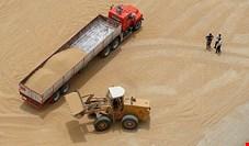 خرید گندم در نیمه اول سال کاهش یافت