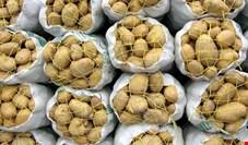 آبروداری سیبزمینی برای دولت روحانی با گرانی ۱۴۹ درصدی