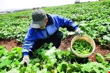 240  دستاورد تحقیقاتی کشاورزی به بخش خصوصی واگذار شد