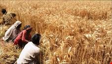 صدرنشینی اقلام کشاورزی در واردات + جدول
