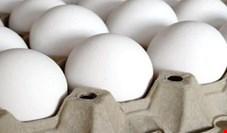 بیش از 90 درصد واحدهای تولید تخم مرغ در استانهای تهران، البرز و قزوین از بین رفت/ تخم مرغ داخلی ارزانتر است وارد کنندگان رقبتی برای واردات ندارند