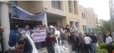 اعتراض دامداران به دلیل واردات بیش از حد است/ در 30 روز گذشته 13000 تن شیرخشک وارد کشور شد