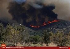 آتش سوزی جنگل ها درکشور 20 درصد افزایش یافت