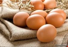نیازتخم مرغ  کشوردر ماه مبارک رمضان تامین است/ قیمت تمام شده هرکیلوگرم تخم مرغ 5700 تومان