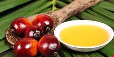 افزایش واردات روغن پالم از مالزی/ سهمیهای شدن واردات پالم رانت جدی برای برخی افراد ایجاد میکند