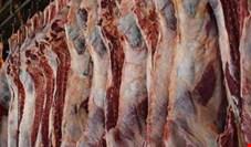 واردات گوشت، ۶۰ هزار رأس دام سنگین را در واحدهای دامداری انباشته کرده است