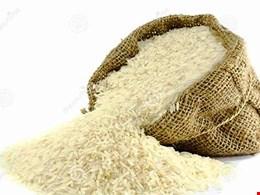 یک گرم برنج هم تا پایان سال نباید وارد شود/ اینکه مردم پول خرید برنج ایرانی را ندارند، دلیلی برای واردات نیست