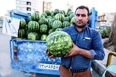 40 هزارتن هندوانه کمتر ازسال قبل برای شب یلدا آماده شد