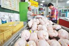 قطعی برق و گرانی غذای دام، قیمت مرغ راگران کرد/ غذای دام دست چند نفر است و باید از آنها خرید!