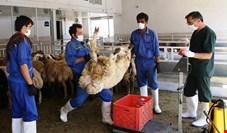 رکود شدید در بازار گوشت قرمز