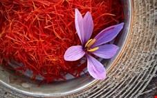 طلای سرخ ارزان شد/رشد ۳۰ درصدی صادرات زعفران