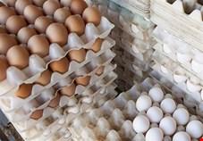 ۴۰ درصد گلههای مرغ تخمگذار فرسوده است