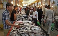 قیمت انواع ماهی منجمد در بازار چقدر است؟