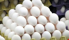 چرا قیمت تخممرغ نجومی شد؟