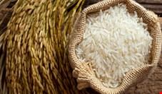 سه برابر شدن قیمت برنج جفا به مصرفکنندگان است/ سازمانهای نظارتی در خوابی هستند که با صد پتک بیدار نمیشوند