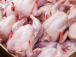 قیمت گوشت مرغ گرم ۲۰ هزار و ۴۰۰ تومان است