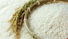 قیمت برنج در دولت دوازدهم چقدر گران شد؟