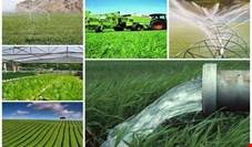 از ۲۵ شرکت دولتی بخش کشاورزی ۵ شرکت زیانده است
