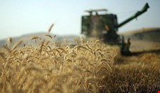 عملکرد تولید کشاورزان نمونه ایران ۳ تا ۳/۵ برابر کشاورزان عادی است/ در صورت وجود اراده در دولت، ایران میتواند بهجای واردات، به صادرکننده گندم و جو تبدیل شود