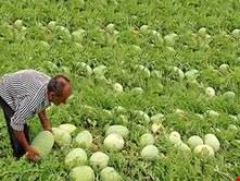 عراق واردات پنج محصول کشاورزی ایرانی را ممنوع کرد
