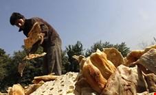 ضایعات سالانه کشور معادل غذای 15 میلیون نفر/ بخش کشاورزی تحت فشاری نابجا است
